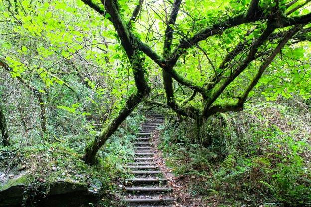Excursión Cascadas de San Estevo do Ermo